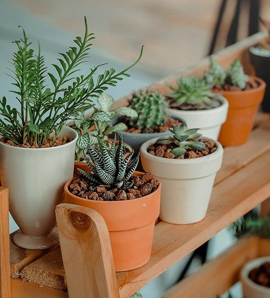 7. Koop een aantal planten