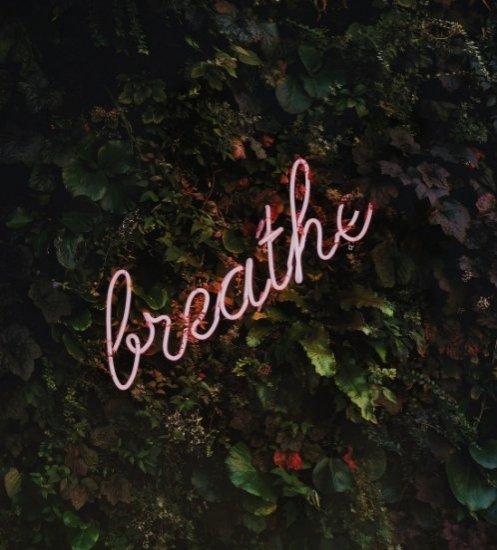 5. Plaats planten in je woning tegen stress