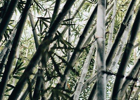 Het verschil tussen houten en bamboe jaloezieën